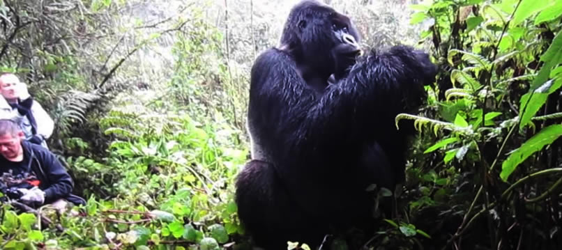 Virunga National Park Congo Conservation efforts Crucial for survival inhabiting Wildlife