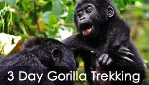 Rwanda gorillas trekking