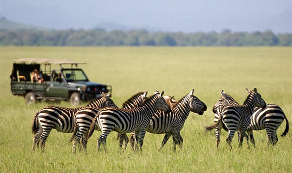 Kenya safaris in Africa