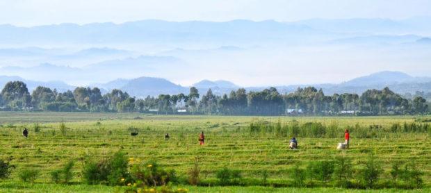 rwanda-safari