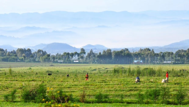 rwanda safaris