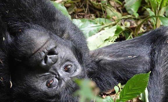 2018 gorilla naming ceremony