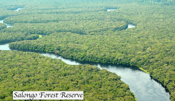 DRC to Start Oil Mining in Virunga &Salongo Forest Reserve
