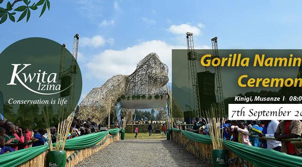 Gorilla namers