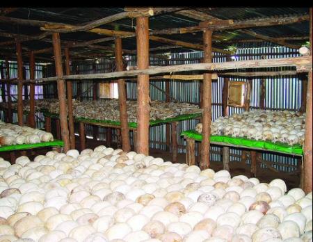 Rwanda-Cultural-Tourism