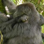 Virunga National Park To Re-Open For Tourism