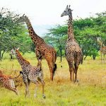 Travel Guide to Akagera National Park