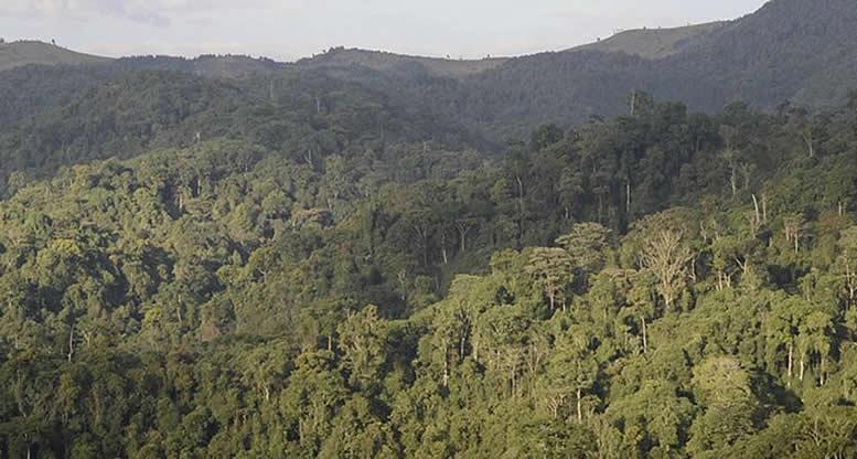 Wilderness Safaris to Offer Chimp Trekking In Gishwati Mukura National Park