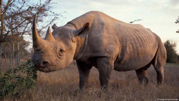 Rhino Tracking in Rwanda