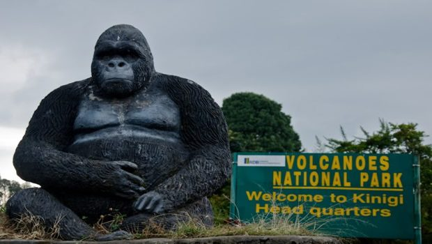 Top six safari activities to do in Rwanda's Volcanoes National Park