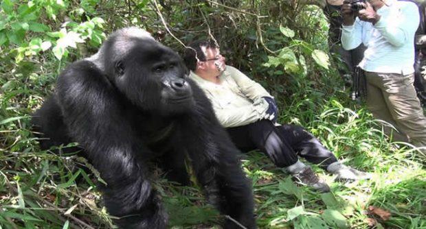 pose-with-gorilla