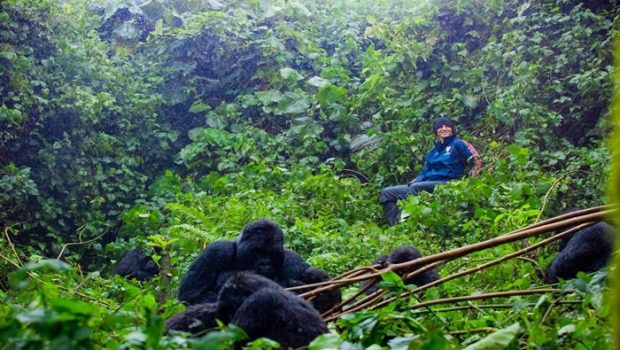 Arsenal player David Luiz treks mountain gorillas in Rwanda