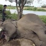 Wildlife Poaching Doubles in Uganda in Covid19 Lockdown