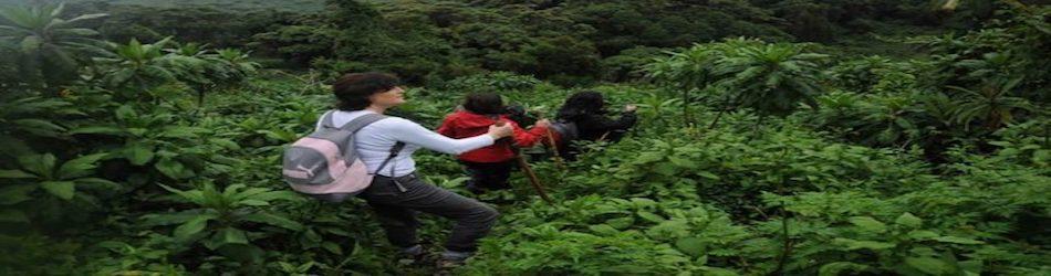 gorilla-trekking-volcanoes-np