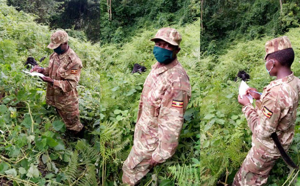 gorilla trekking during covid-19 times
